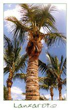     Unter Palmen wär' ich gern'     Costa Teguise    