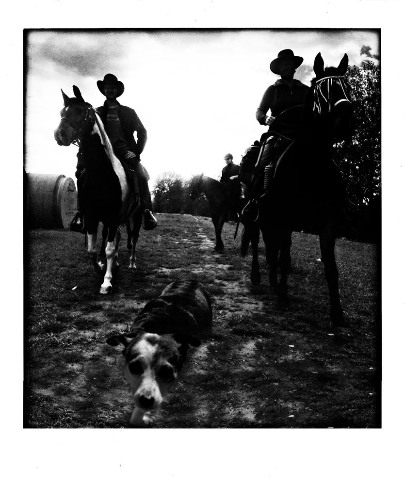 unter Pferden.