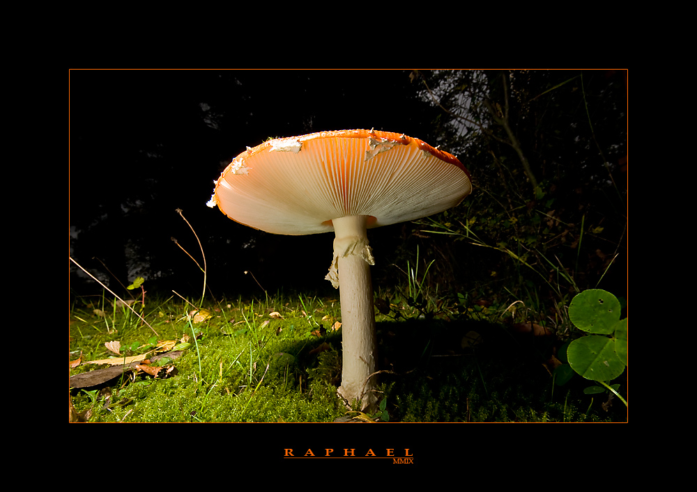 unter Pilzen 5