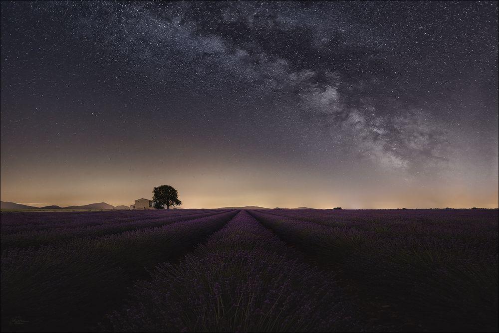 Unter Sternen mit Lavendelduft...