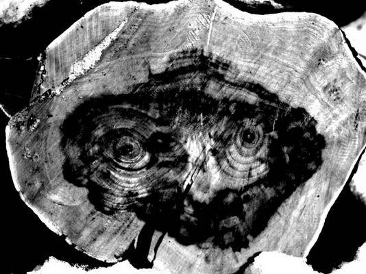 Unter vier Augen (The eyes of an old oak)