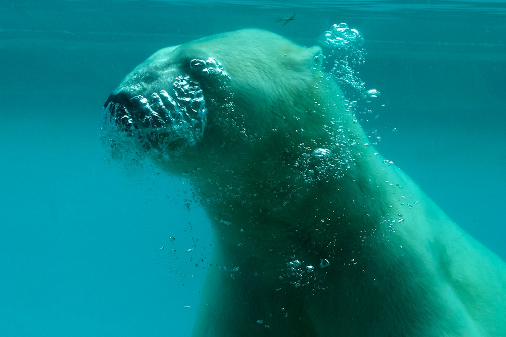 unter Wasser ...