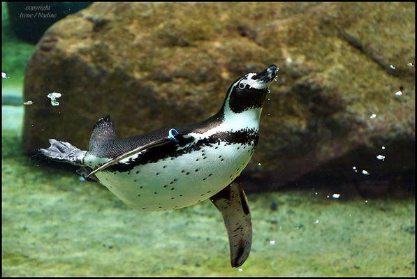 ** Unter Wasser Ballett **