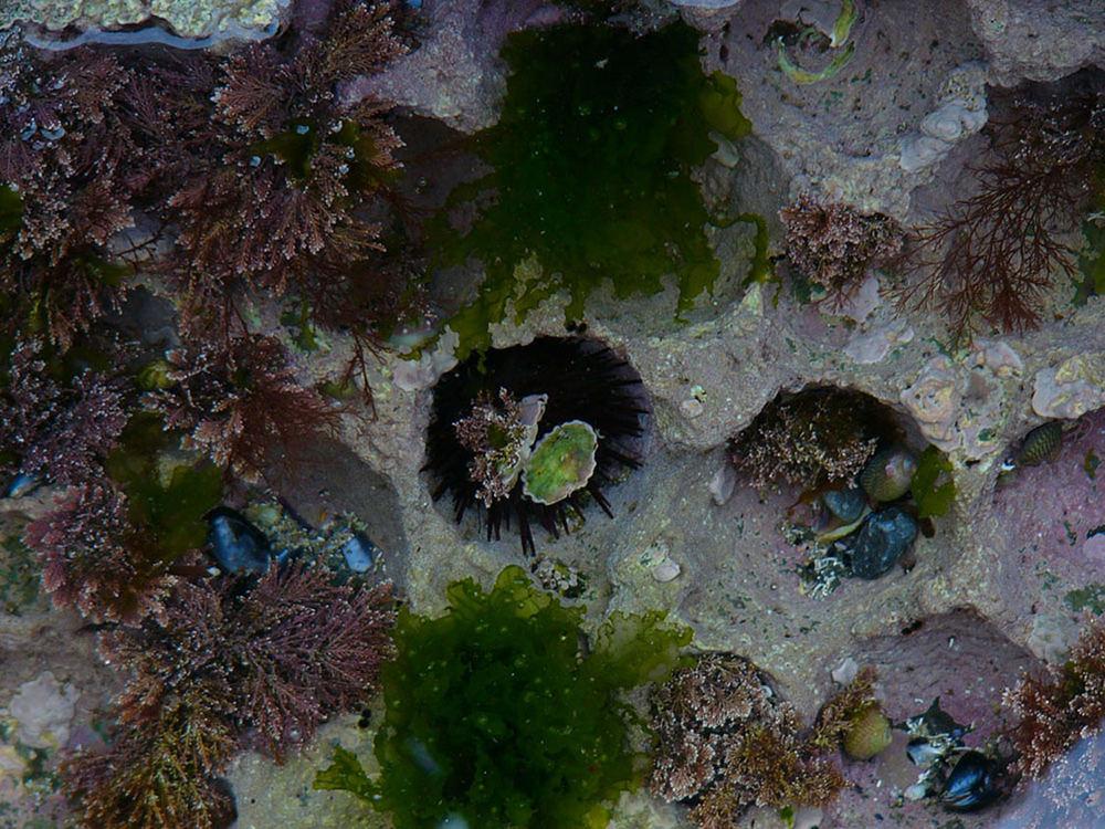 Unter Wasser bei Ebbe