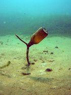 Unter Wasser Stilleben