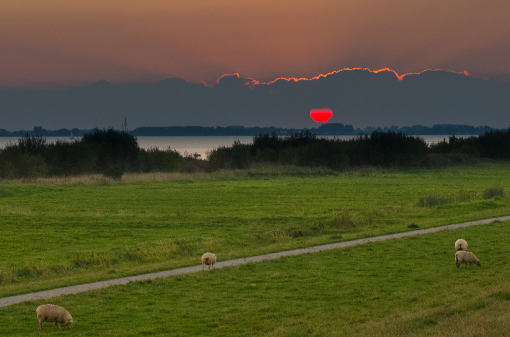 Untergehende Sonne an der Elbe bei Kollmar