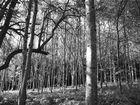 Unterholz 2