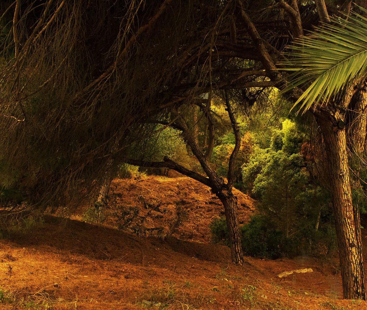 Unterholz im Urwald in Andalusien