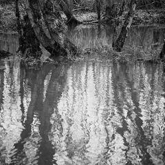 Unterholz-Wasser II