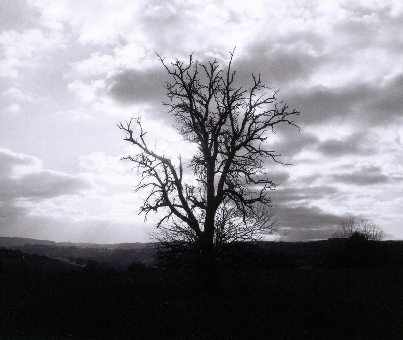 Unterm alten Eichenbaum