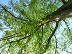 Unterm Baum ...