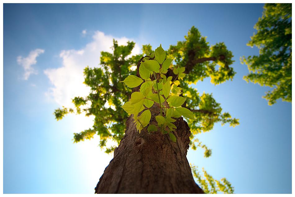 Unterm Baum im grünen Gras