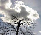 Unterm Birnbaum2