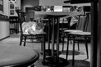 Unter`m Tisch