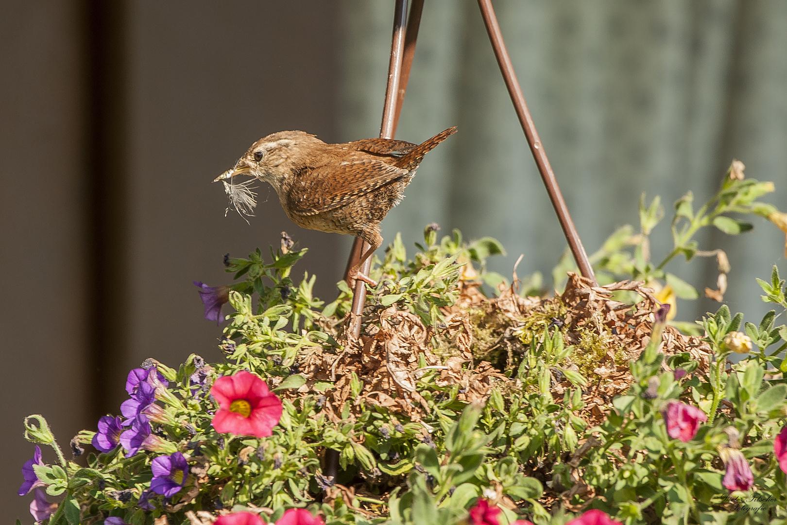 Untermieter im Garten