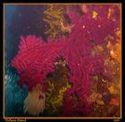 Unterwasser-4