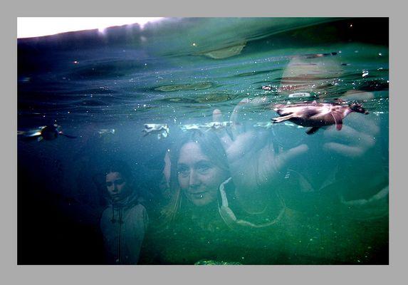 Unterwasser-Besucher