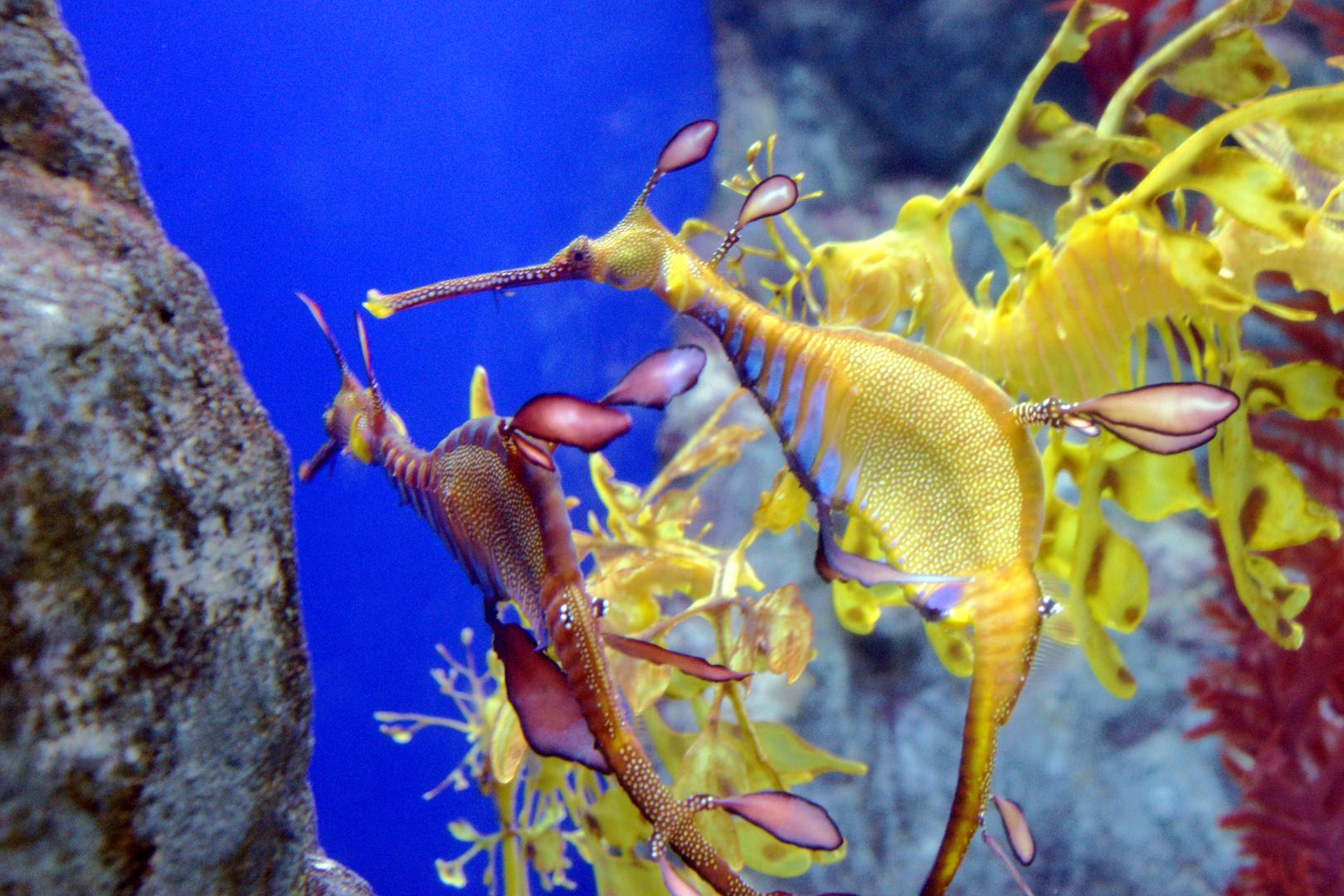 Unterwasser Bild