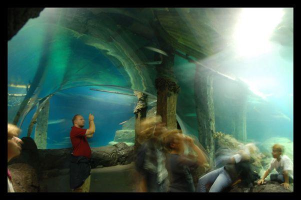 Unterwasser Hektik