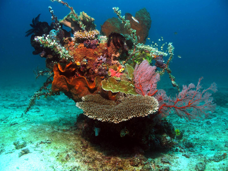 Unterwasser Ikebana - Korallenriff im Kleinformat im Norden Sulawesis