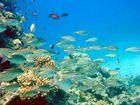 Unterwasser Impressionen