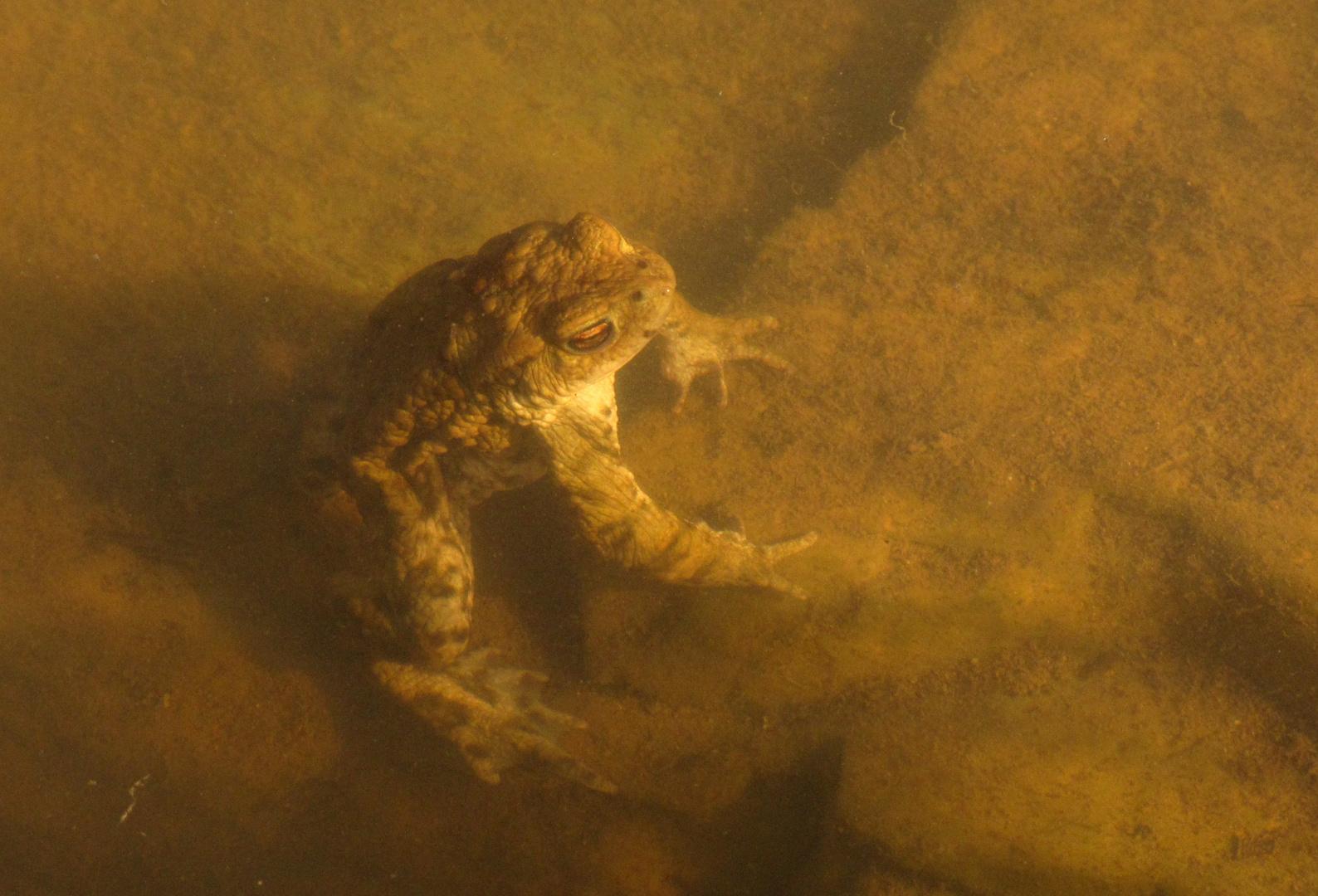Unterwasser-Meditation