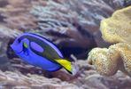 Unterwasser-Rummschwimmtier