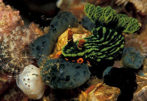 Unterwasser Schmetterling