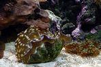 Unterwasser- Schönheiten