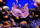 Unterwasser Tanzen