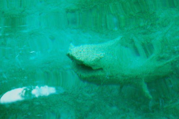 Unterwasser-Ungeheuer ?
