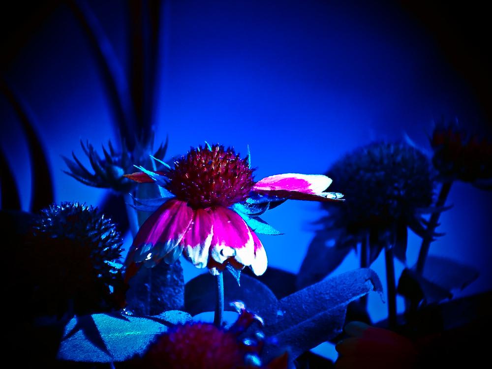 Unterwasserblume, oder???