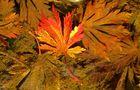 Unterwasserfarben
