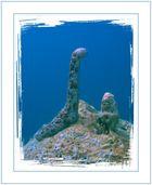 Unterwassergiraffe