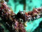 Unterwasserschnecken
