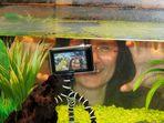 Unterwasserwelt I C U