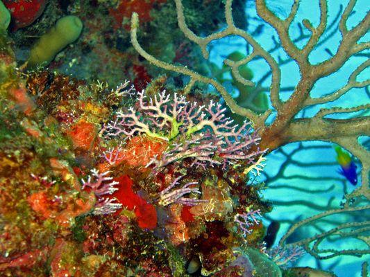 Unterwasserwelt Kuba