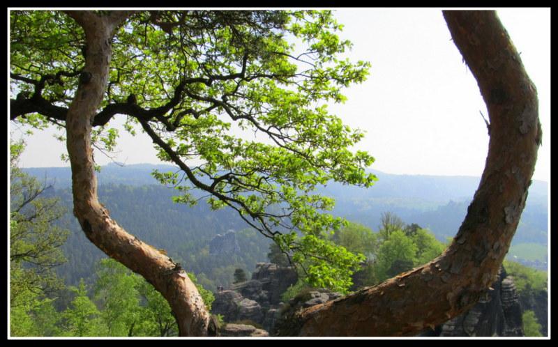 ...unterwegs im Elbsandsteingebirge...