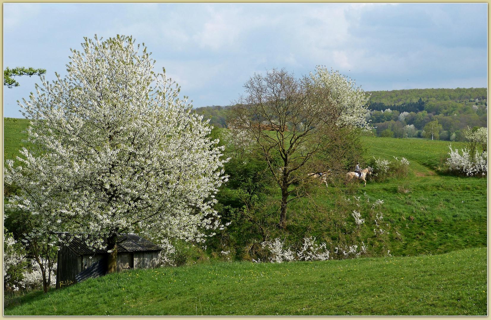 unterwegs im Frühling...