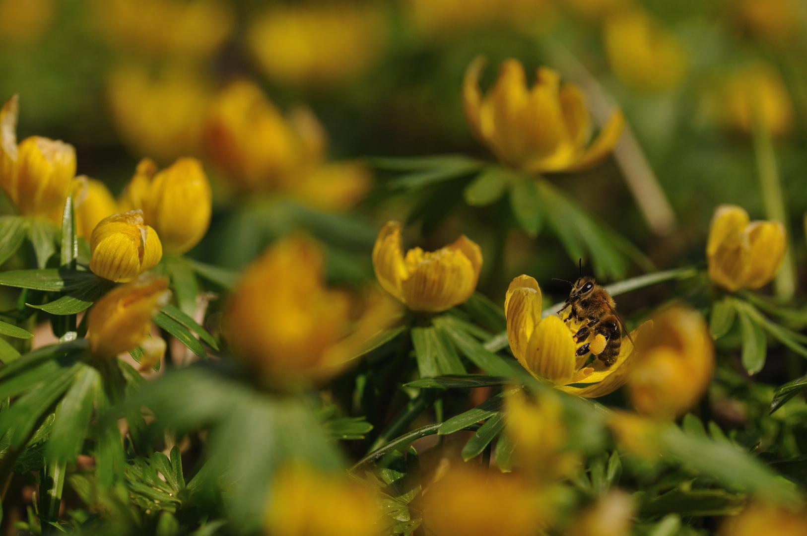 Unterwegs im gelben Blütenmeer