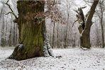 Unterwegs im Pilzwald..