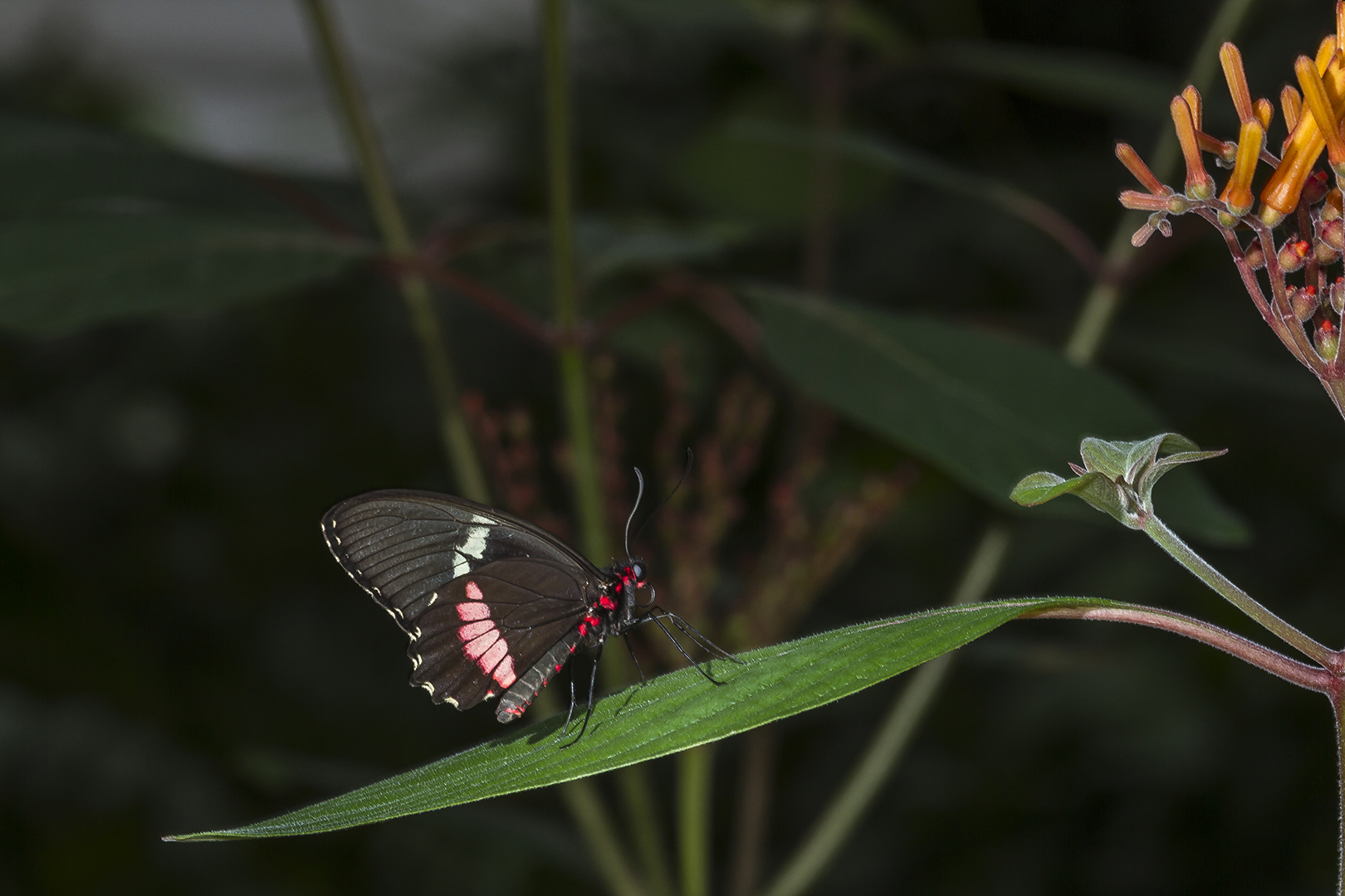 Unterwegs im Schmetterlingshaus auf der Insel Mainau