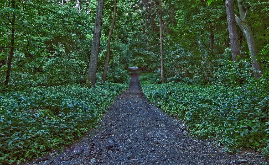 .....unterwegs im Wald....