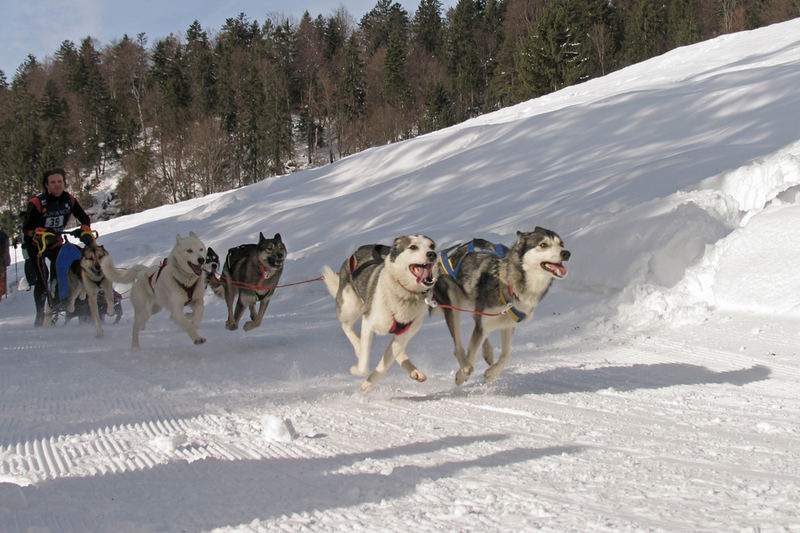 Unterwegs mit 6 HS (Hundestärken)