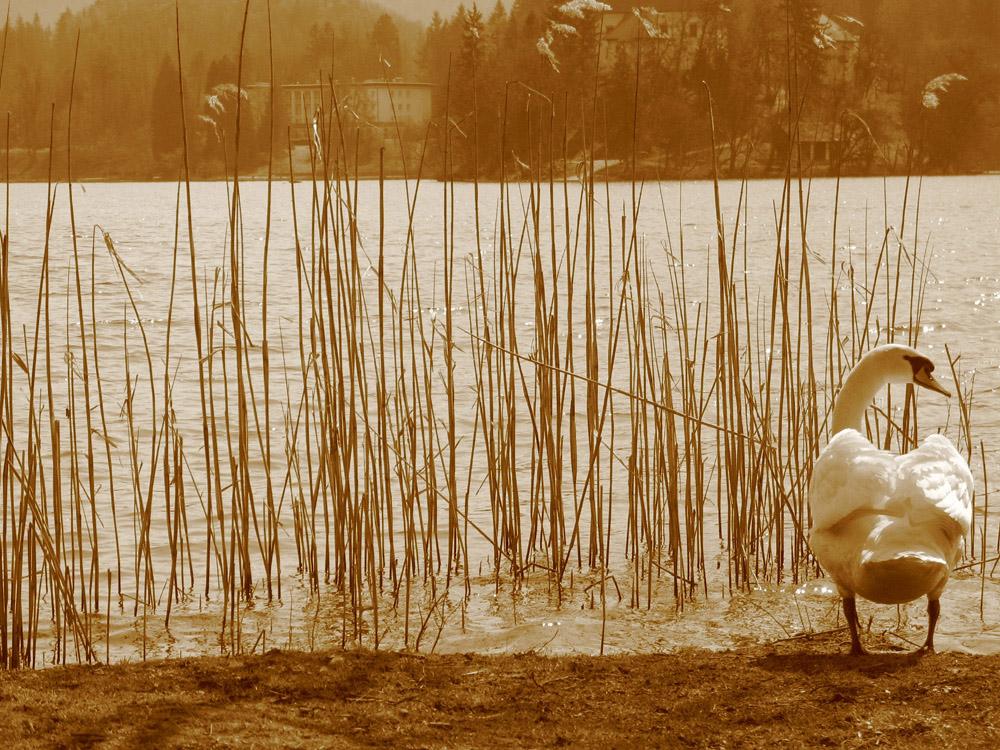 untitled...(lago di bled)