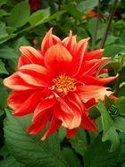 Unvergessene Blüte