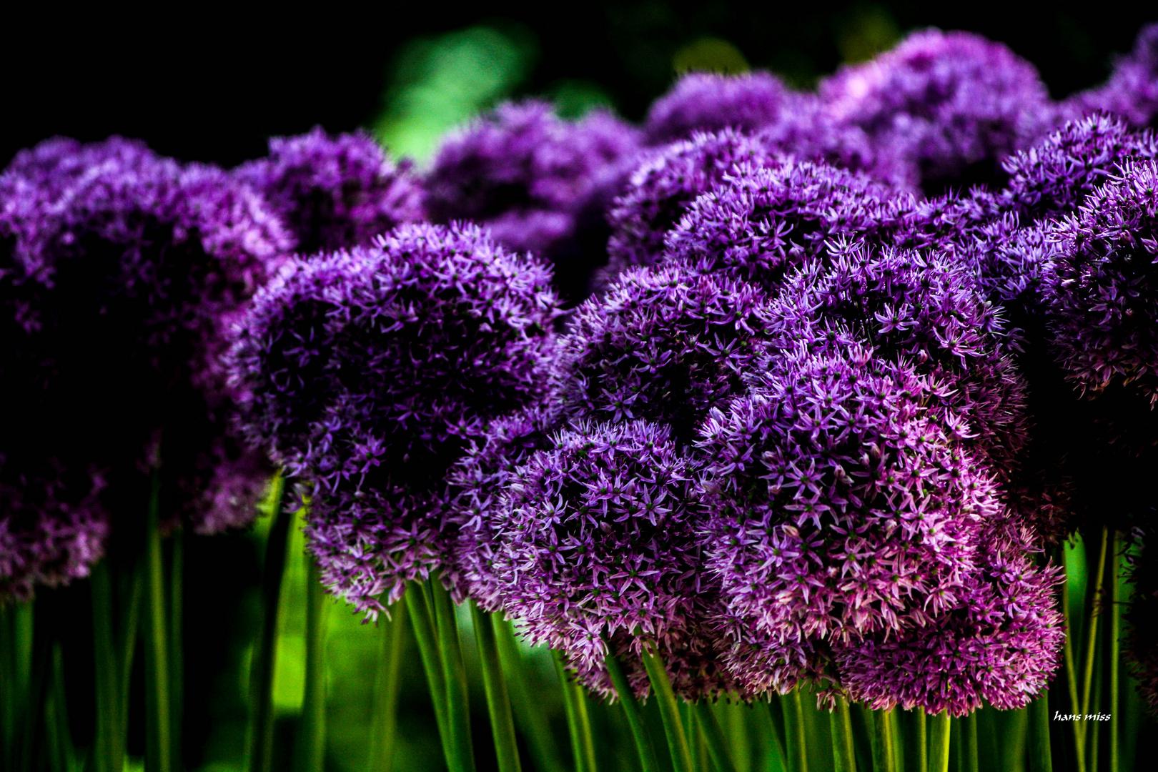 unzählige Blüten