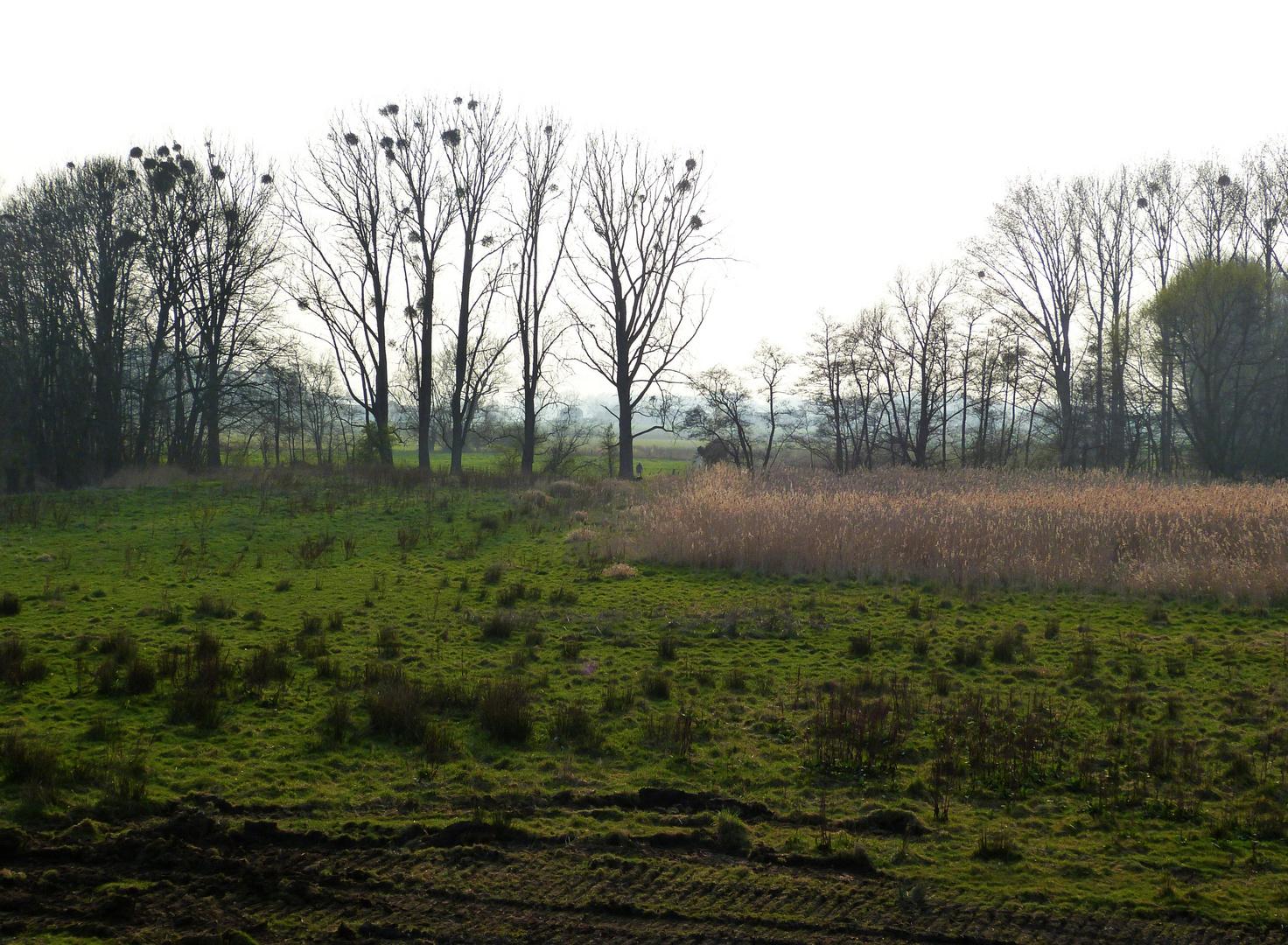 unzerstörte Natur im Feuchtgebiet Blutwiese
