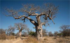 Upside-Down-Tree
