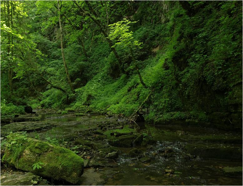 Ur-Wald